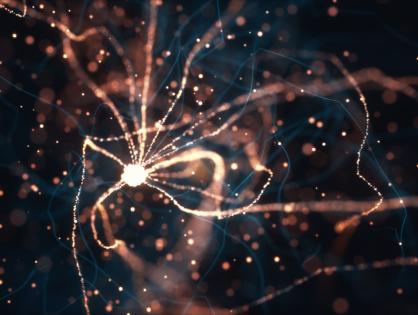 Una investigación sorprende: ciertas células deben morir para reparar la mielina