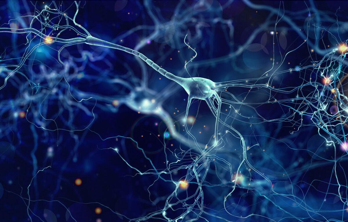 Ensayo de tratamiento para Esclerosis Múltiple con anquilostomas no reduce lesiones detectadas pero modifica los perfiles inmunes