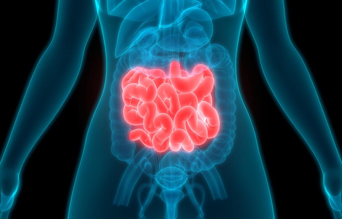 Una combinación de bacterias del intestino empora síntomas de la Esclerosis Múltiple
