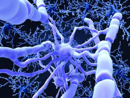 Descubren posible inmunoterapia universal para Esclerosis Múltiple que deja intacto el resto del sistema inmunológico