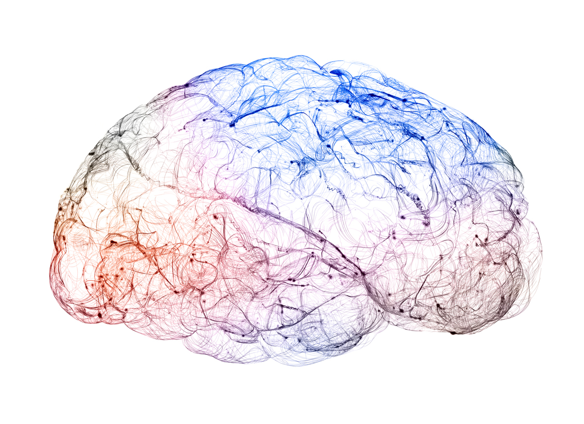 Descubren molécula que hace que células del cerebro puedan formar nueva mielina tras lesión
